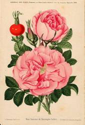 affiche roses